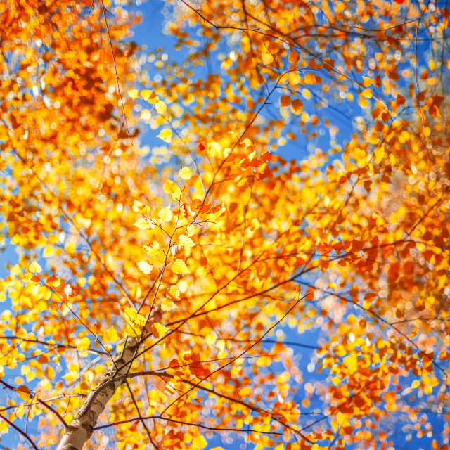 """Autumn leaves and defocused background"" stock image"