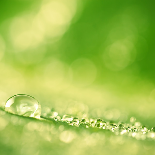 """Green leaf with drops of water"" stock image"