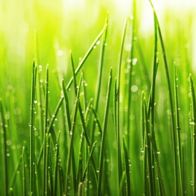 """""""Green wet grass with dew on a blades"""" stock image"""