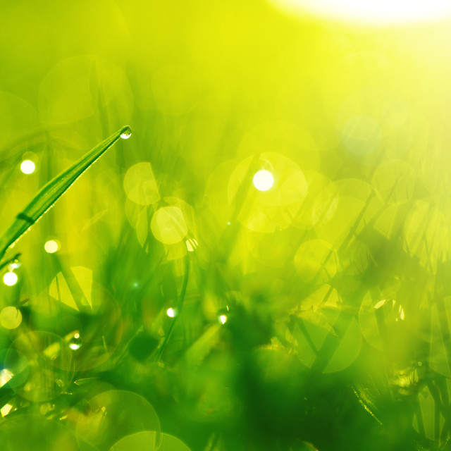 """Green wet grass with dew on a blades. Shallow DOF"" stock image"