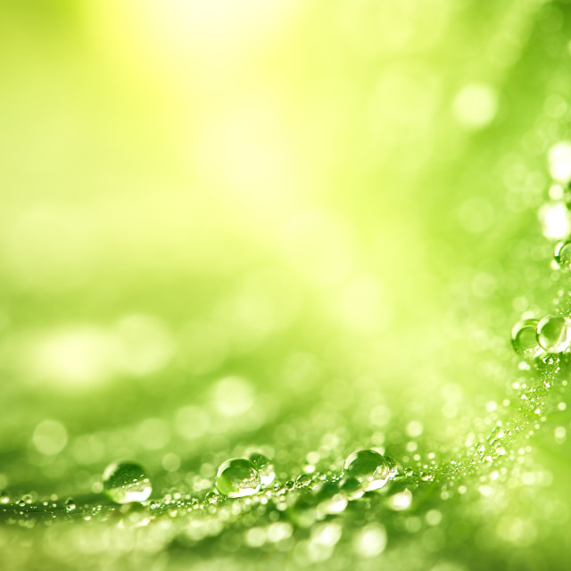 """Beautiful green leaf with drops of water"" stock image"