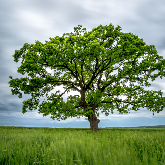 """Blurred Long-Exposure green tree in a field"" stock image"