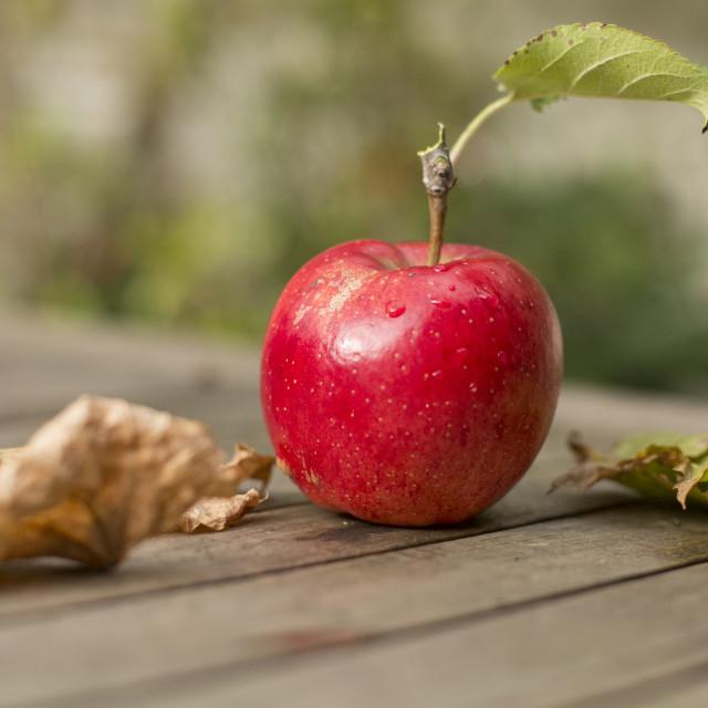 """Fresh red apple"" stock image"