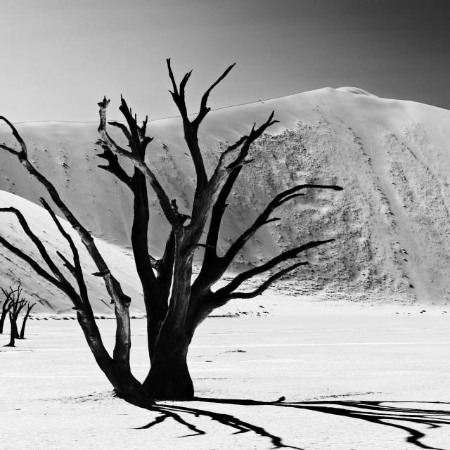"""""""Deadvlei, desert landscape of Namib at Sossusvlei, Namibia"""" stock image"""