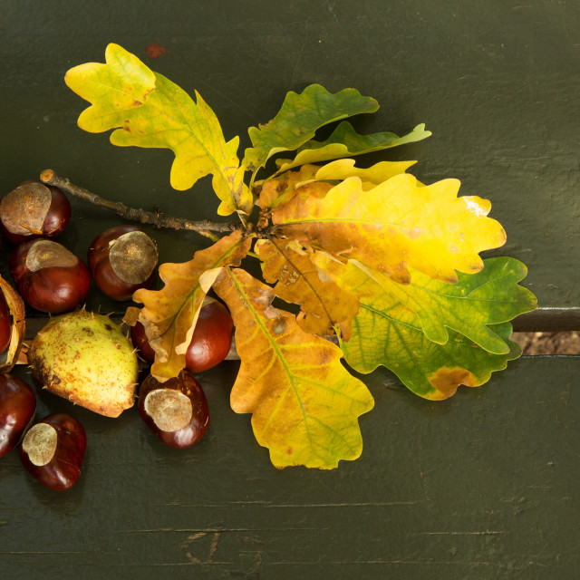"""""""Several chestnuts and leaves on a park bench.Horizontal."""" stock image"""