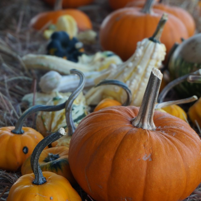 """Various sizes and shapes of pumpkins and gourds"" stock image"