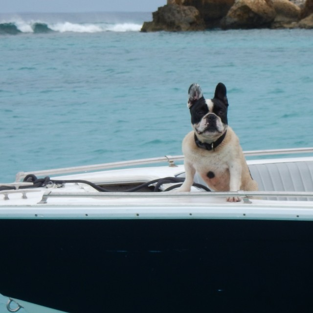 """Dog on a boat"" stock image"