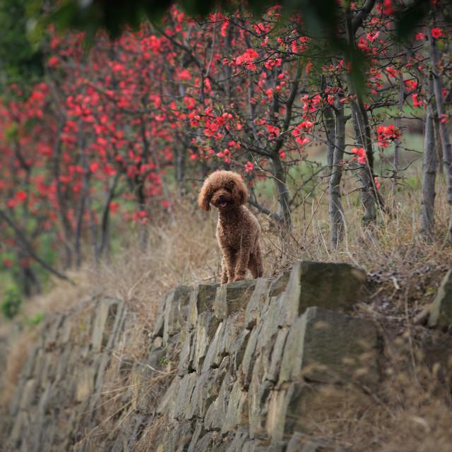 """lovely doggy"" stock image"