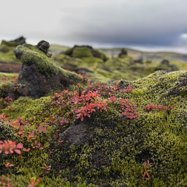 """autumn in the moss"" stock image"