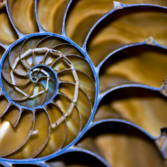 """Nautilus geometric spiral"" stock image"