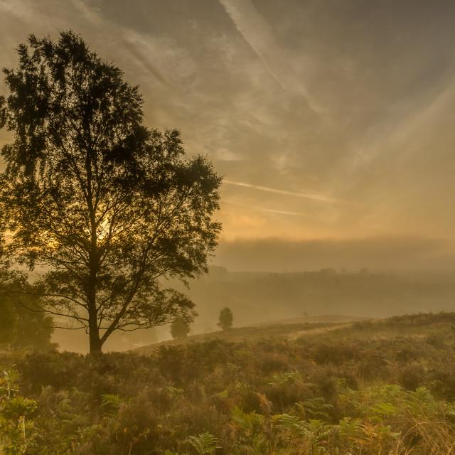 """Sherbrook Valley Sunrise"" stock image"