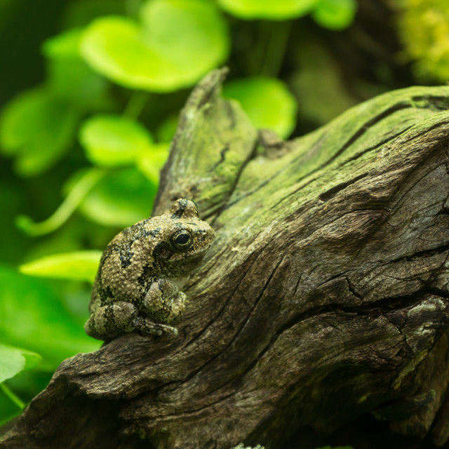 """Frog in National Zoo, Washington DC."" stock image"