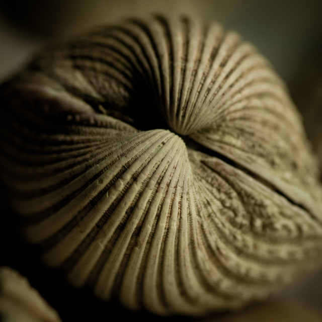 """Shells 01"" stock image"
