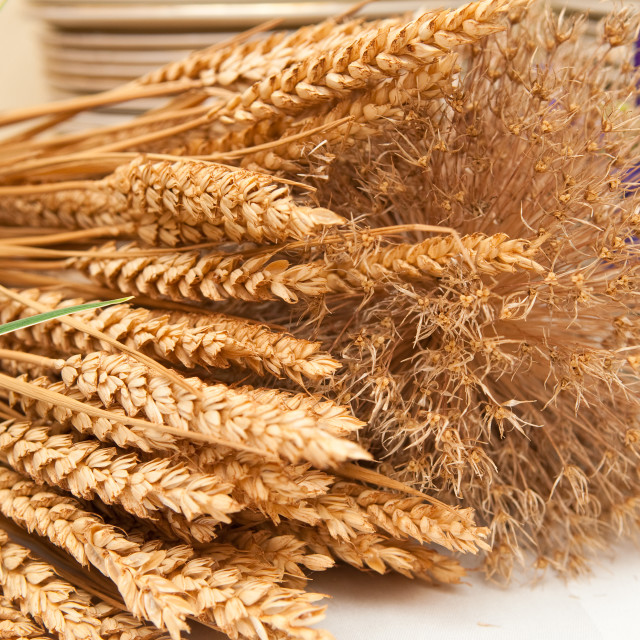 """Dried Wheat"" stock image"