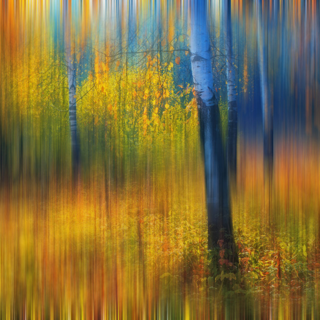 """""""In The Golden Woods. Impressionism"""" stock image"""