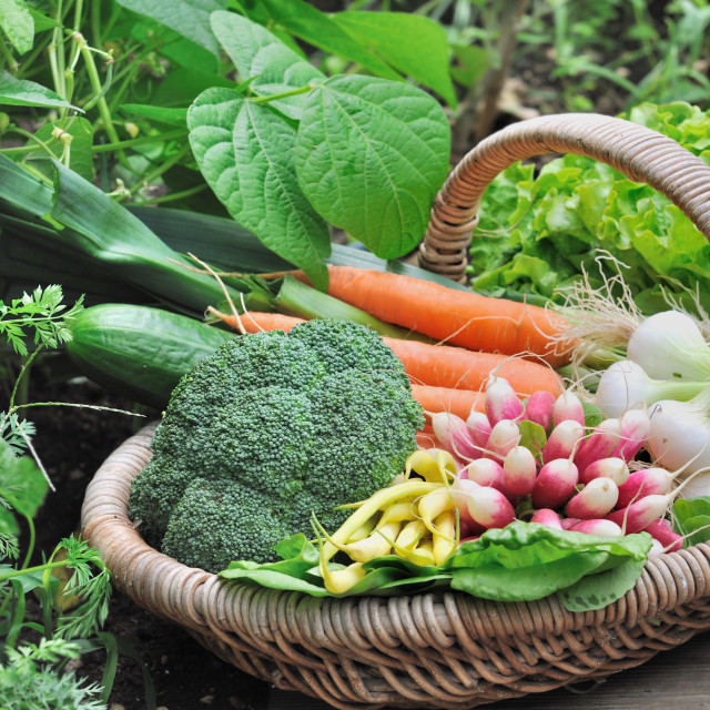 """garden vegetables"" stock image"