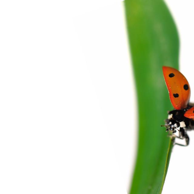 """fly of ladybird"" stock image"