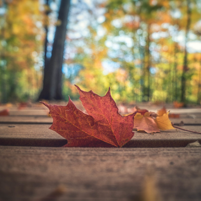"""Autumn Vibe"" stock image"