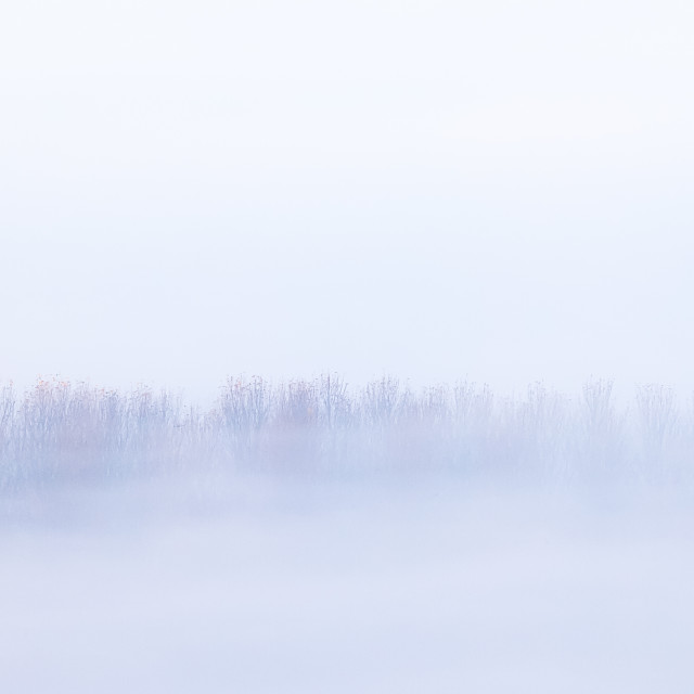 """Trees in mist"" stock image"