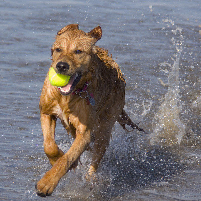 """Retrieving"" stock image"