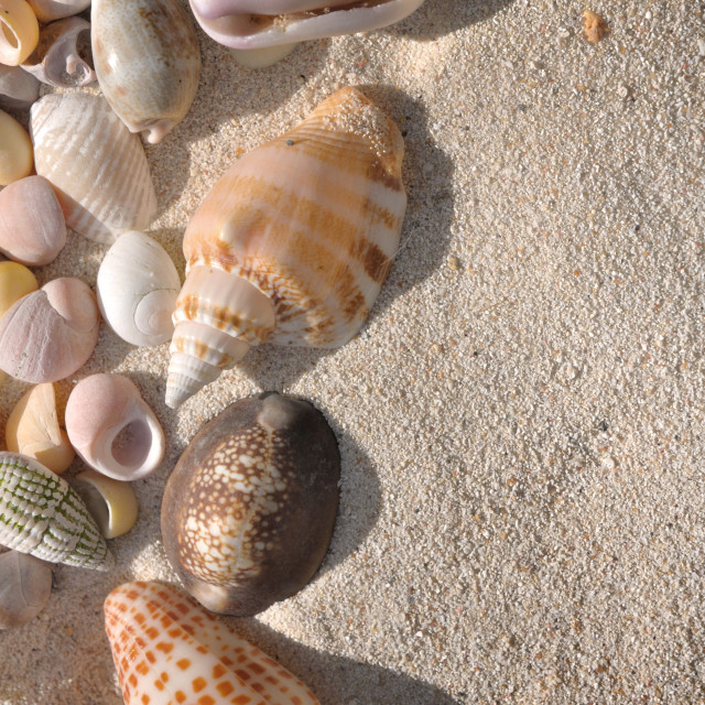 """seashells collection"" stock image"