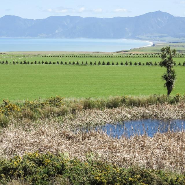 """Palliser Bay landscape"" stock image"