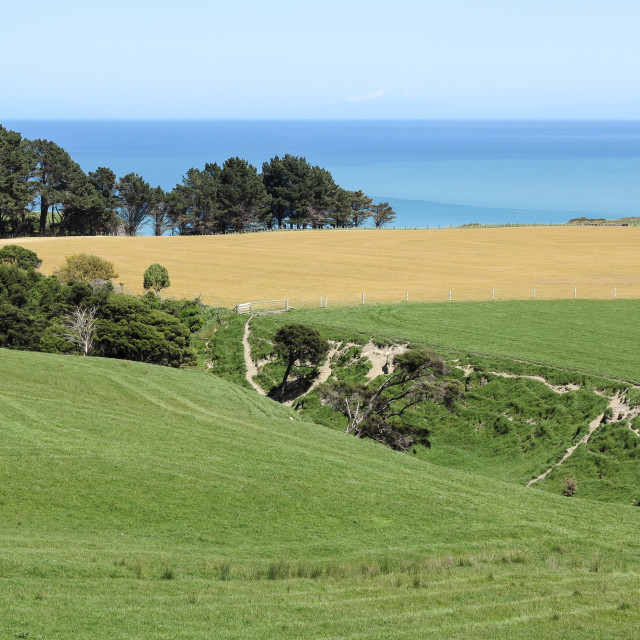 """Palliser Bay farmland"" stock image"