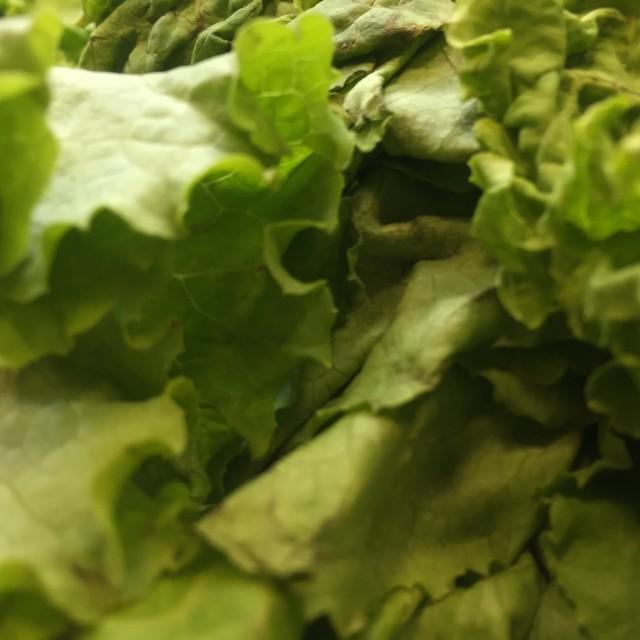 """""""fresh Lettuce"""" stock image"""