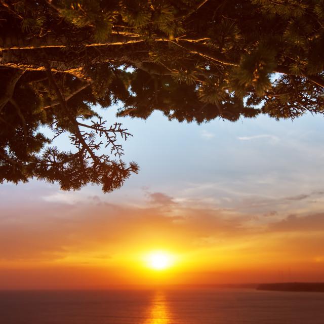 """Tree brunch against sunset sky background"" stock image"