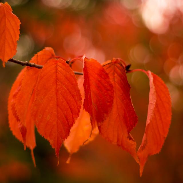 """Shades Of Autumn"" stock image"