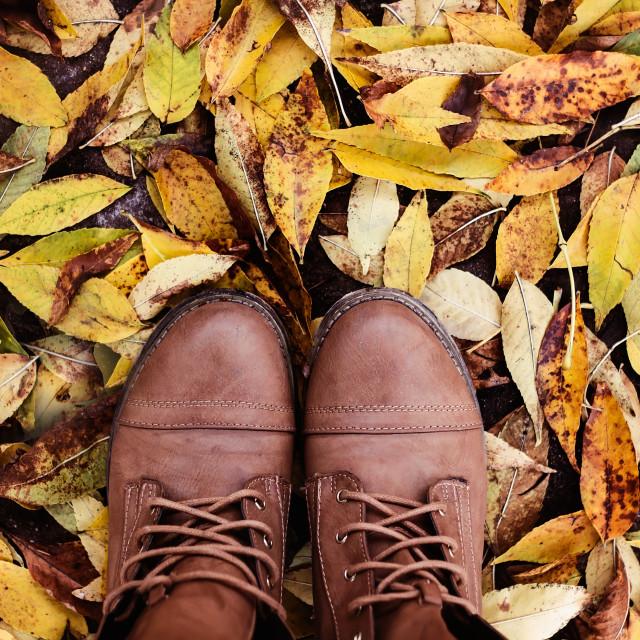 """Fallen leaves of autumn"" stock image"