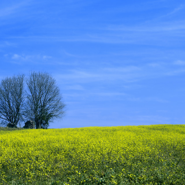 """Landscape Blue Sky and Tree"" stock image"
