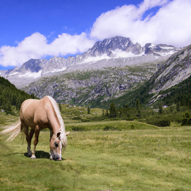 """Grazing Horse"" stock image"