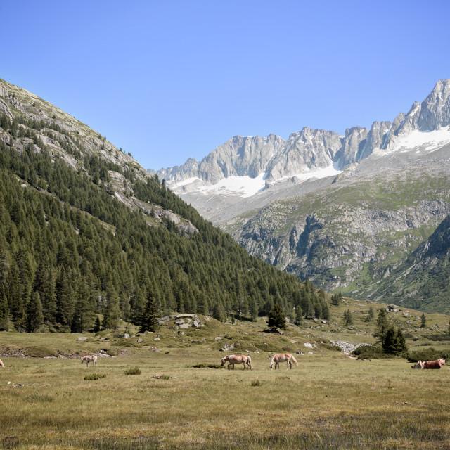 """Landscape in Italy Dolomites"" stock image"