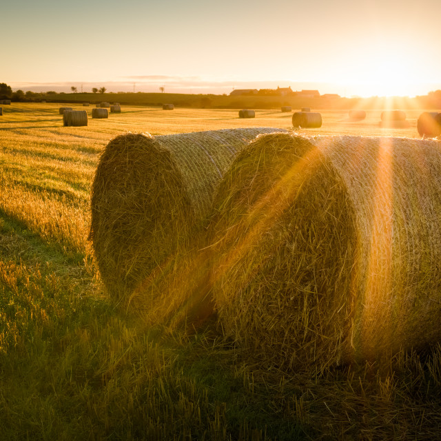 """Autumn Bales"" stock image"