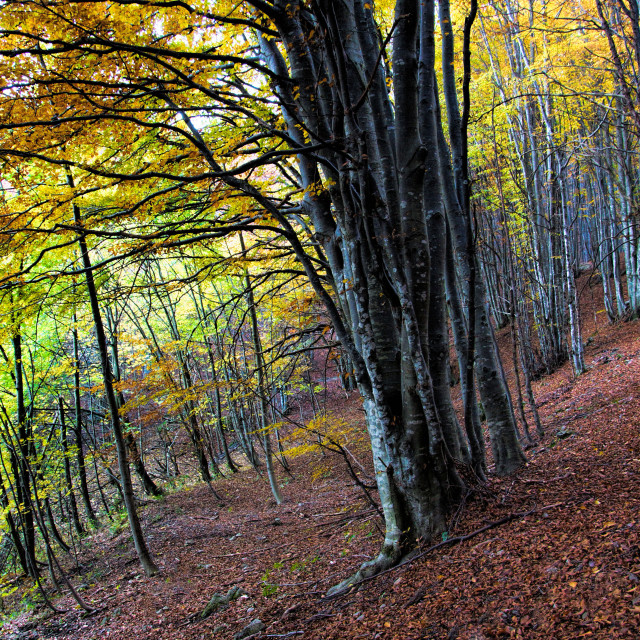 """""""Autunno"""" stock image"""