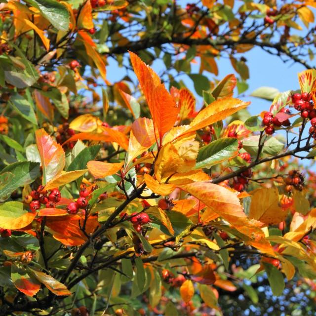 """Beautiful Colours of Autumn."" stock image"