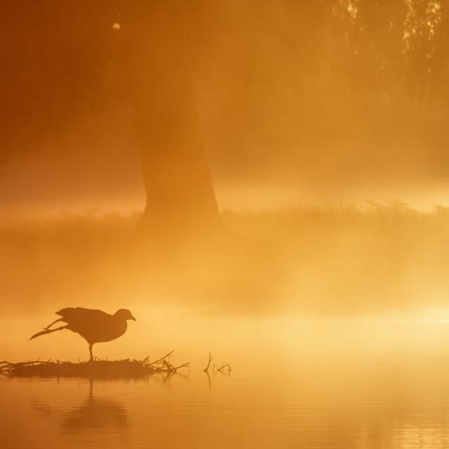 """Early Morning Yoga"" stock image"