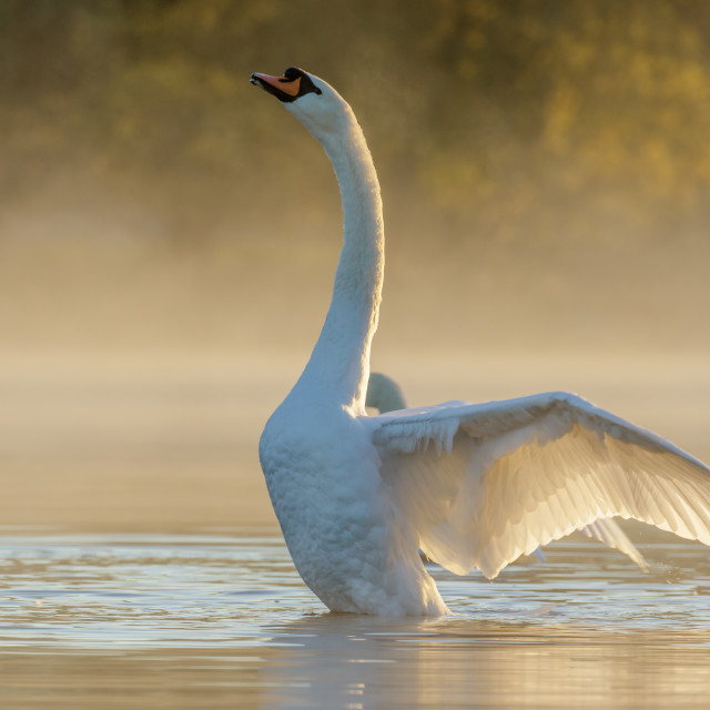 """""""Morning Stretch"""" stock image"""