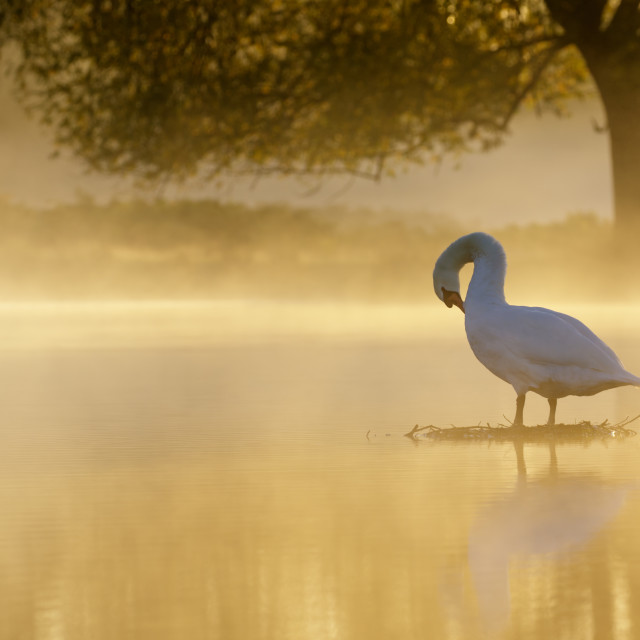 """Morning Preen"" stock image"