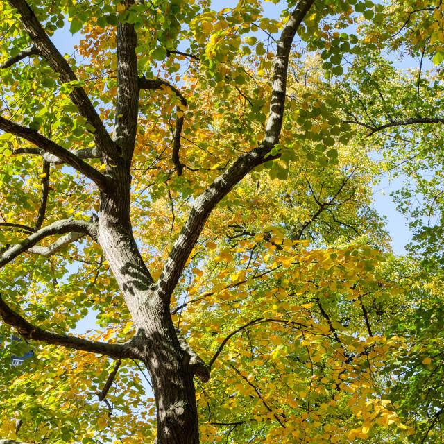 """Beautiful Nature In Autumn"" stock image"