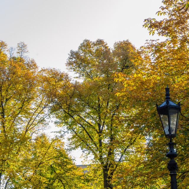 """Old Lantern And Autumn Trees"" stock image"