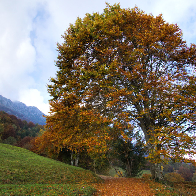 """Autunno"" stock image"