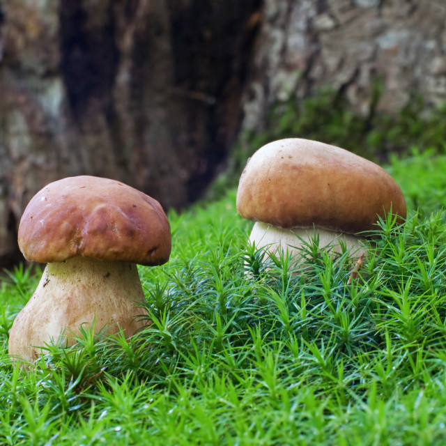 """""""Two ceps"""" stock image"""