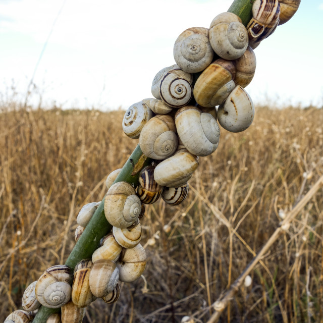"""""""Snails on weed branch"""" stock image"""