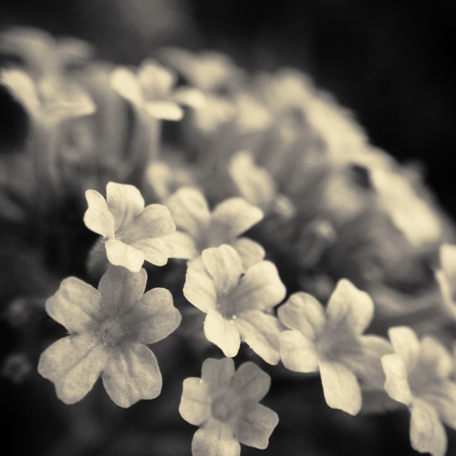 """Dainty flowers"" stock image"