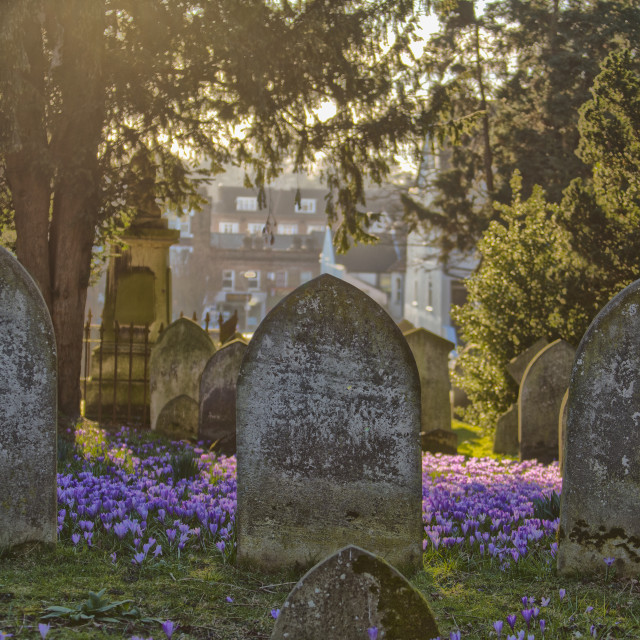"""Tombstones and Crocus"" stock image"