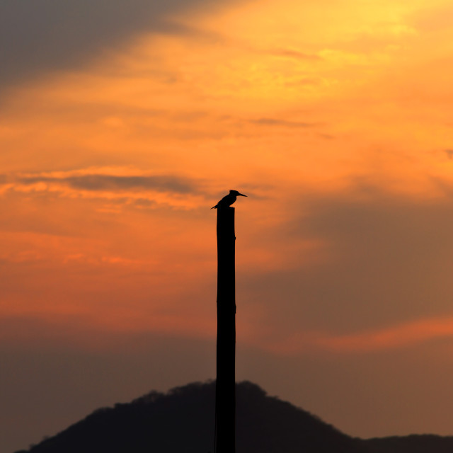 """Kingfisher at Sunset"" stock image"
