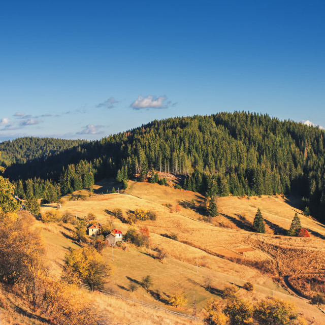 """""""Mountain autumn landscape with colorful forest and traditional h"""" stock image"""