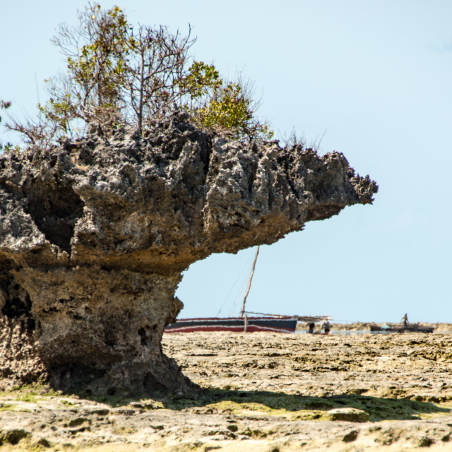 """Coral Outcrop on coast of Mozambique"" stock image"